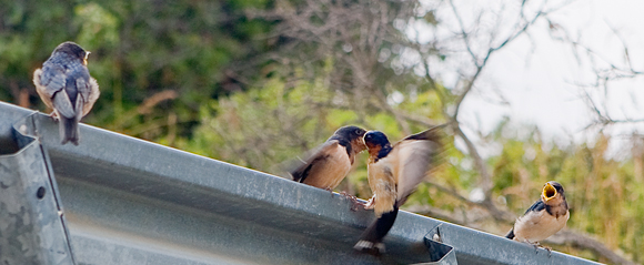Birds can be so demanding...and chatty!